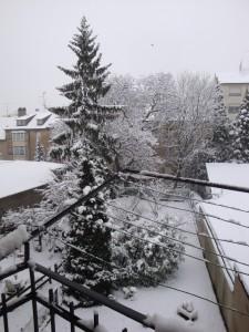 Premières neiges dans le jardin…