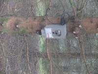 Flashé en forêt !